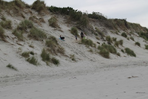 Kids Sledding Down the Sand Dunes.